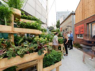 Growmore – mô hình làm vườn cho người thành thị